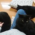 黒猫さんがたくさんいます!