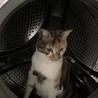 乾燥機能を使用した後を狙う!(^_^;)危ないからやめてほしい。