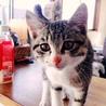 甘えん坊な子猫