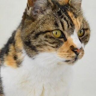 順応性の高い穏やかなシニア猫マサコです。