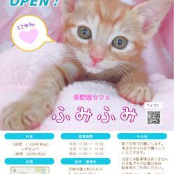 保護猫カフェふみふみOPEN☆彡