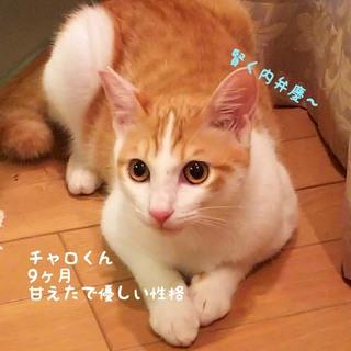 2/22大丸梅田店保護猫の譲渡会*チャロくん