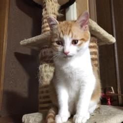 Happy Tabby Clinic猫の譲渡会 サムネイル2