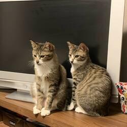 Happy Tabby Clinic猫の譲渡会 サムネイル3