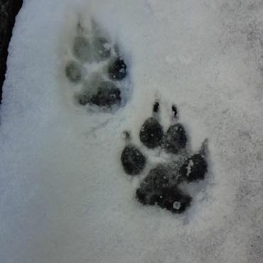初雪~!ななの足あと。