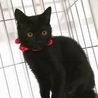 生後6ヶ月、ちょっぴりびびり黒猫はなちゃん