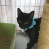 生後6ヶ月、くったくない黒猫のそらくん