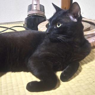 イケメン黒猫くん