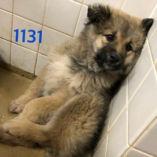 ふわふわな子犬です。1131