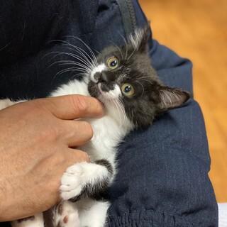 11月生まれの子猫 白黒 モクちゃん♀