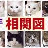 猫達の相関図