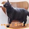 黒猫 あいちゃん 里親様募集♡ サムネイル3