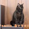 黒猫 あいちゃん 里親様募集♡ サムネイル4