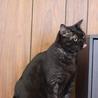 黒猫 あいちゃん 里親様募集♡ サムネイル6