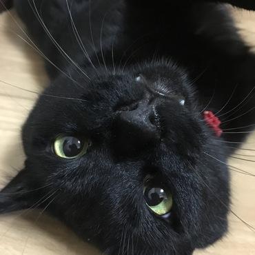 小次郎の写真