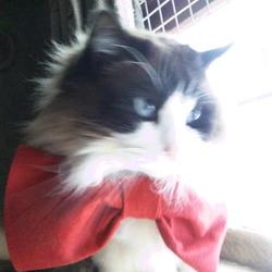 猫の日・赤いリボンの日!