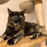 【すず】おやつ大好きツンデレ猫