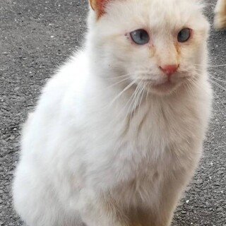 ブルーの瞳の白い小さい男の子 動画あり