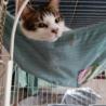 【開催中止】相模大野駅前北口デッキ♪猫の譲渡会♪