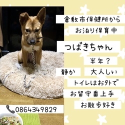 倉敷っ子つばきちゃんのお泊り保育二日目→譲渡決定