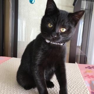 ハンサムな黒猫さん