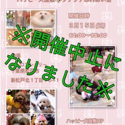 ※開催中止※保護犬プチプチふれあい会in松戸シャロンシェリー