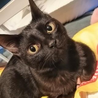 人見知りな黒猫ココちゃん