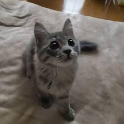 猫の散歩について