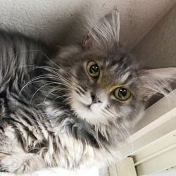 【中止のお知らせ】さいたま市動物愛護ふれあいセンターにて「保護ネコ譲渡会」開催