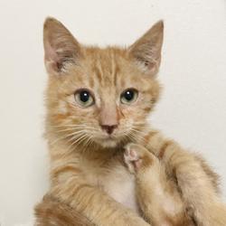 【中止のお知らせ】さいたま市動物愛護ふれあいセンターにて「保護ネコ譲渡会」開催 サムネイル2
