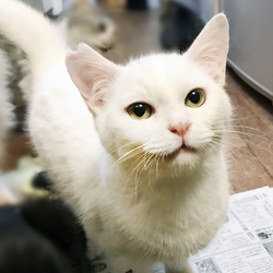 【中止のお知らせ】さいたま市動物愛護ふれあいセンターにて「保護ネコ譲渡会」開催 サムネイル3