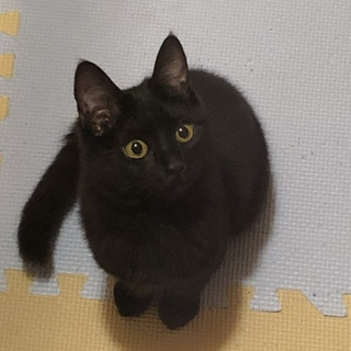 とても可愛い黒猫の里親さんを探しています