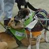 スタイル抜群、ずばぬけた運動能力の屋久島犬 サムネイル4