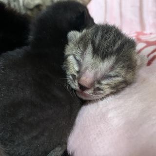 産まれたてのかわいい子猫❤︎