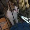 コンビニに住み着いていた妊娠中の猫を保護しました!