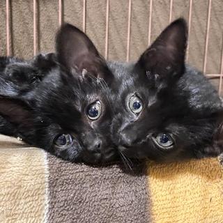ツヤツヤ真っ黒‼︎黒豆兄妹1ヶ月