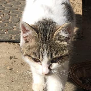 懐こい3カ月くらいの子猫ちゃん