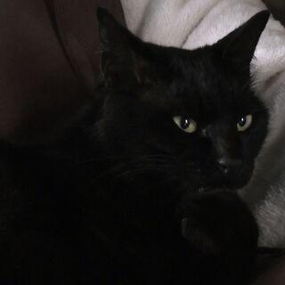 リッツ 黒猫 クロネコ 男の子 甘えん坊