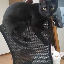 「椅子が好き」サムネイル1