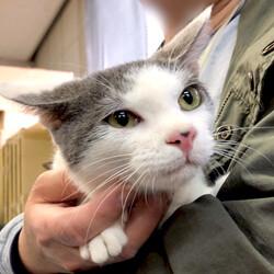 【開催中止】▼猫の譲渡会▼名古屋市港区