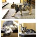 ミケのちびっ子が動物病院で待っています☆