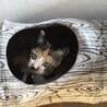 可愛ければ全てが許される。猫の万能スキル!
