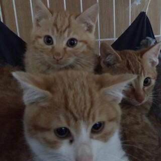 仲良しの子猫♪茶白のミカンと茶トラのマリオ♂