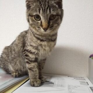 5ヶ月/人・場所・猫見知りなし/だんちゃん♀