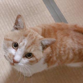 保護猫♡茶茶丸なでなで大好き!