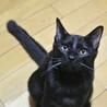 懐っこいにも程がある肩乗り子猫は今日もゴロゴロ♡ サムネイル7