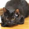 懐っこいにも程がある肩乗り子猫は今日もゴロゴロ♡ サムネイル6
