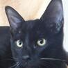 懐っこいにも程がある肩乗り子猫は今日もゴロゴロ♡ サムネイル4