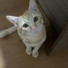 幸運を呼ぶカギしっぽの茶トラ猫(≧∀≦)