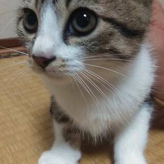 野良猫の子、生まれ2ヶ月ぐらい。しつけ時間が必要!